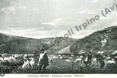 Pascolo sull'Altopiano di Laceno